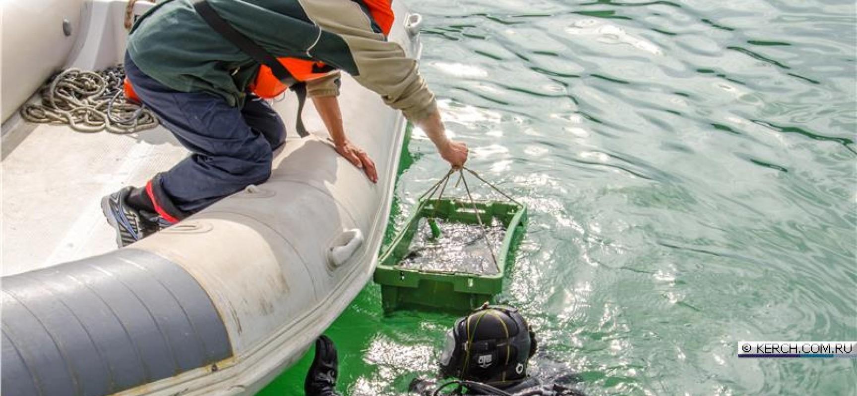 Древнее «керамическое поле» исследуют под водой в районе мыса Ак-бурун