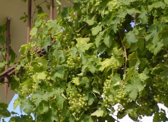 Винодельческие предприятия Крыма и Кубани в 2015 году приняли решение создать ограниченную партию вина «Крымский мост»