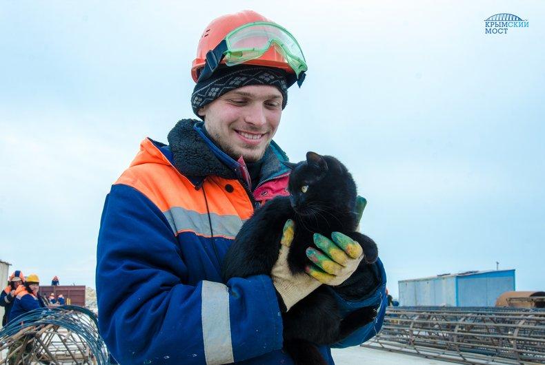 На стройке Керченского моста поселилось несколько котов