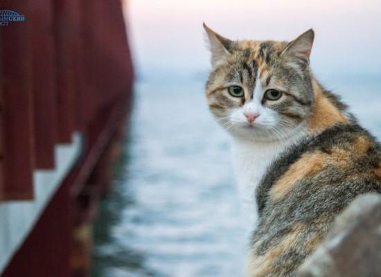 Коты на стройке Керченского моста