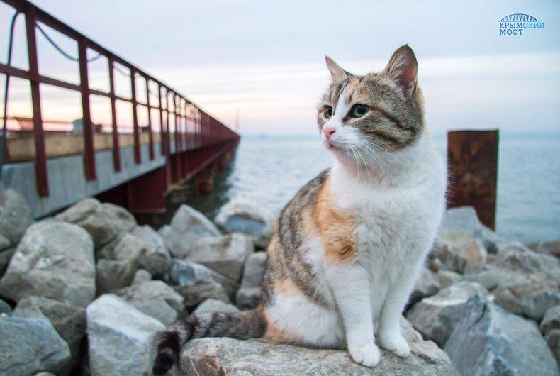 Коты дальтоники