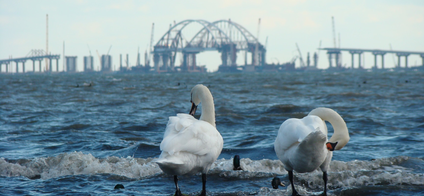 Ученые наблюдают за дельфинами в районе строительства моста через Керченский пролив