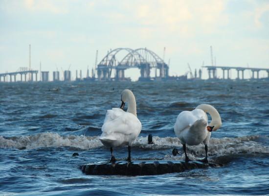 Откроют ли мост раньше срока?